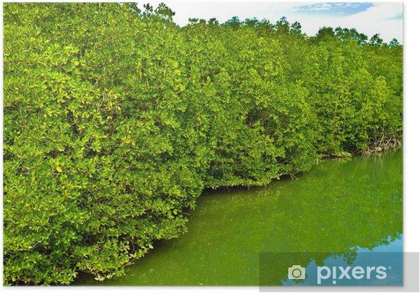 Plakat Lasów Mangrove - Azja