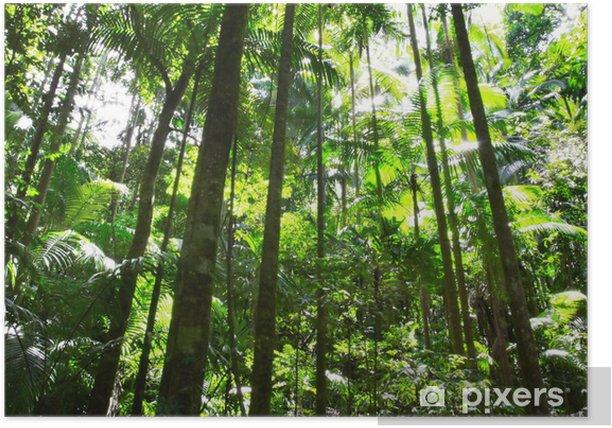 Plakat Lasy deszczowe - Oceania