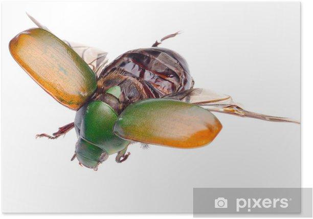 Plakat Latający owad chrząszcz skarabeusz - Inne Inne