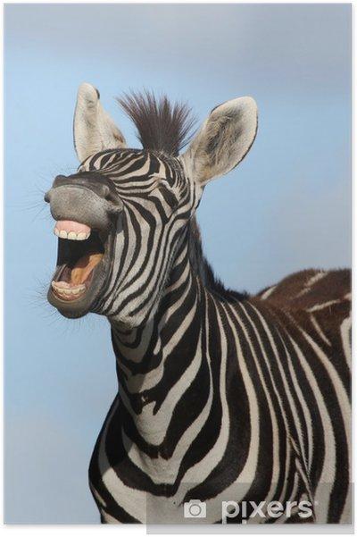 Plakat Laughing Zebra - Zebry