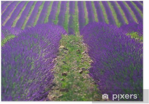 Plakát Lavender # 4 - Roční období