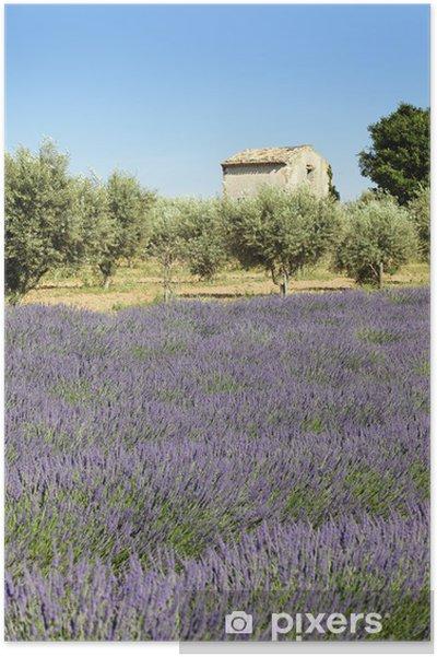 Plakat Lavender gruntu - Rolnictwo