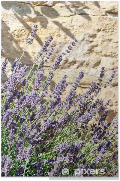 Plakat Lavender latem - Rolnictwo