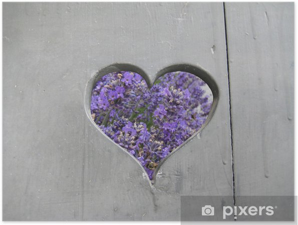 Plakat Lawenda - Kwiaty