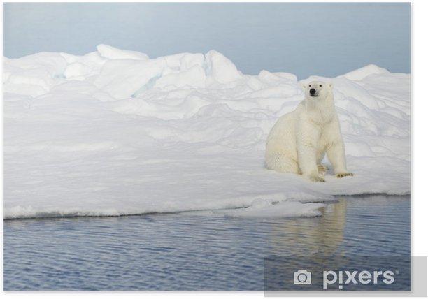 Plakát Lední medvěd na Špicberkách - Témata