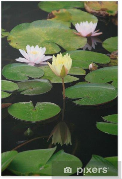 Plakát Leknín - Květiny