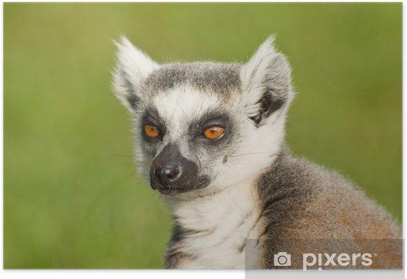 Plakát Lemur portrét - Savci