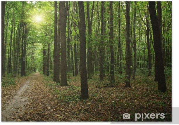 Plakát Les s slunci - Lesy