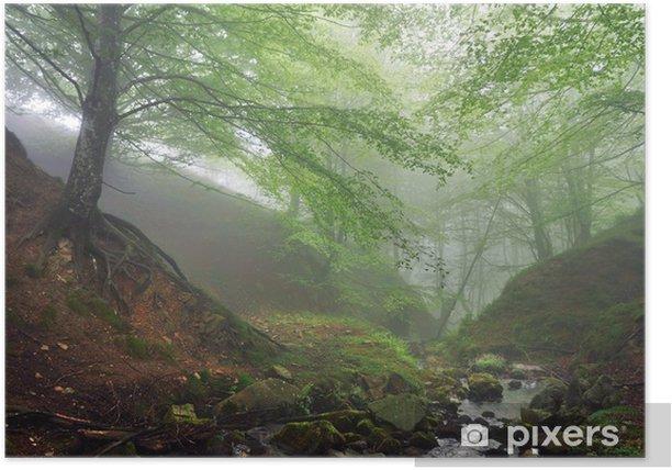 Plakát Lesa s mlhou a proudu - Lesy