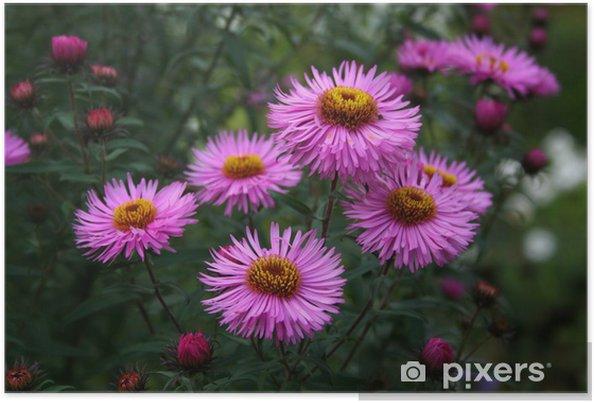 Plakát Letní květiny - Město