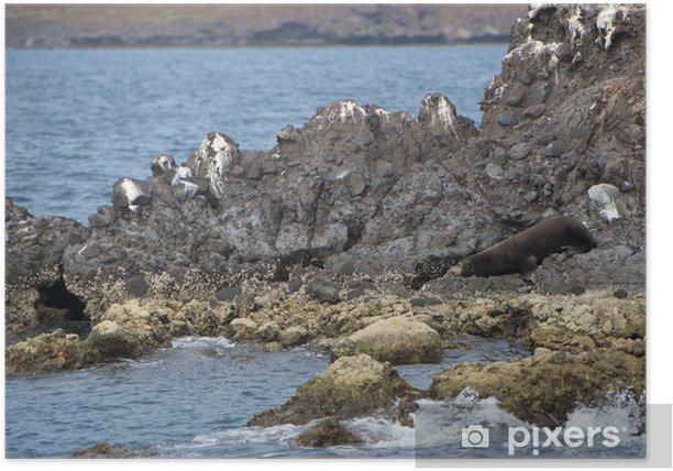 Plakat Lew morski relaks uszczelki - Zwierzęta żyjące pod wodą