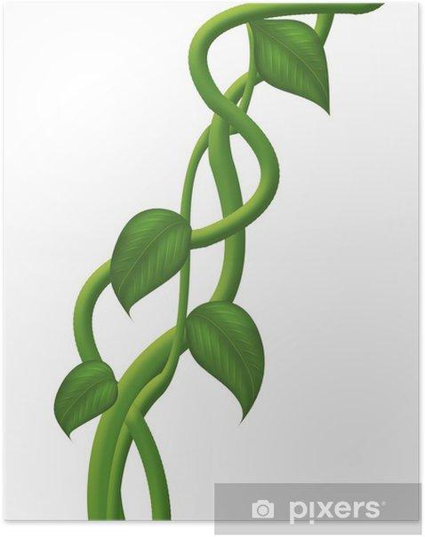 Plakat Liana - Rośliny