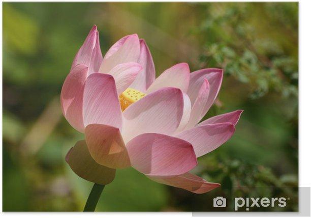 Plakat Lilia wodna - Kwiaty