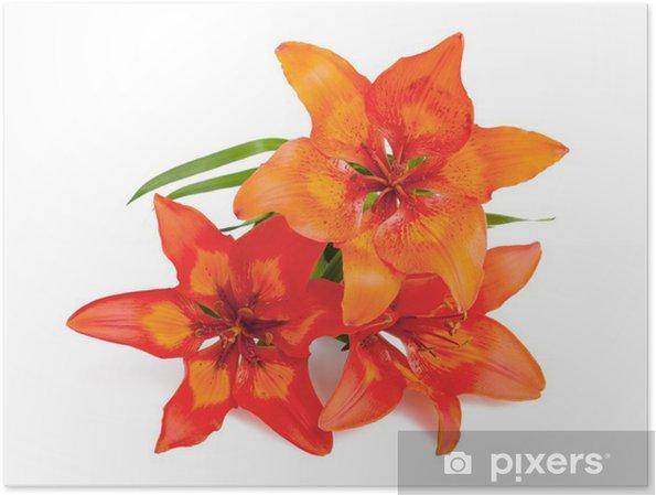 Plakat Lilium martagon - Kwiaty