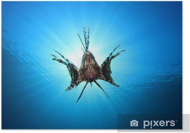 Plakat Lionfish w sunburst - Zwierzęta żyjące pod wodą