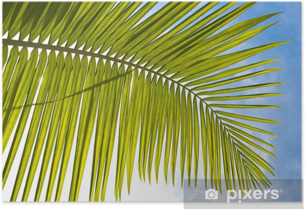 Plakat Liść palmowy - Oceania