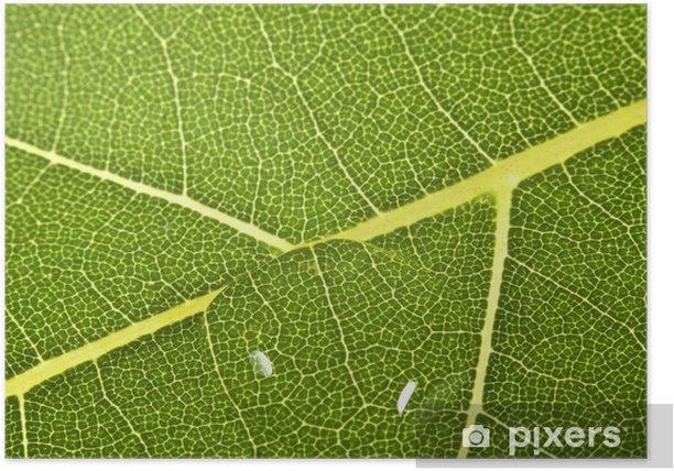 Plakat Liści z kropli wody - Rośliny