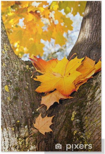 Plakat Liście klonu i pień drzewa - Pory roku