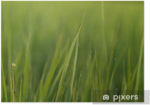 Plakat Liście ryżu - Rośliny