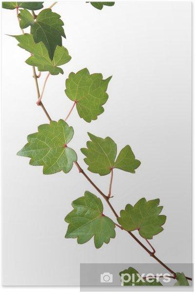 Plakat Liście - Rośliny