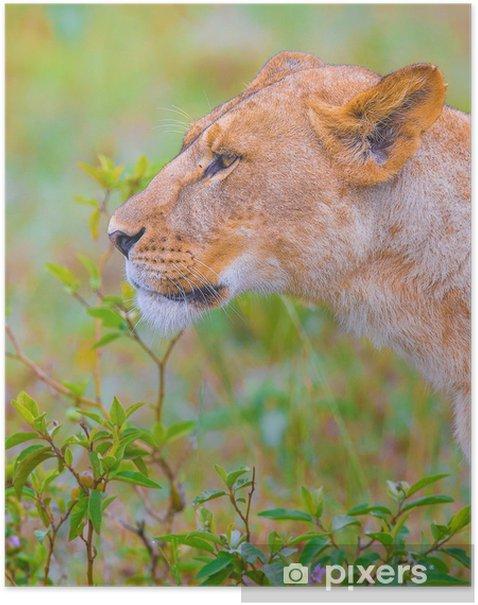 Plakát Lví rodina - Témata