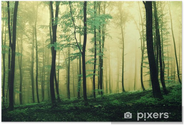 Plakat Magia koloru zielonego lasu - Pory roku