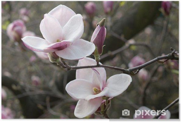 Plakat Magnolia - Tematy