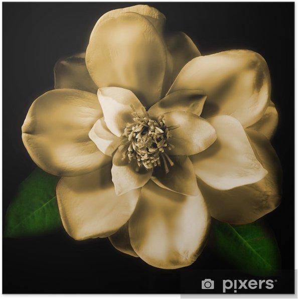 Plakat Magnolia - Kwiaty
