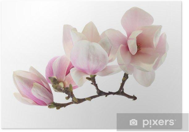 Plakat Magnolia - Pory roku