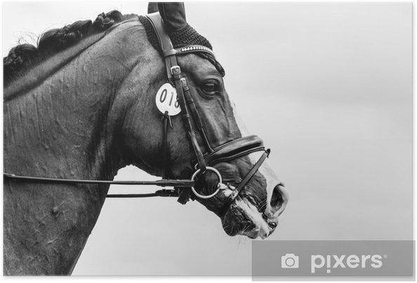 Plakat Majestatyczny koń - Zwierzęta