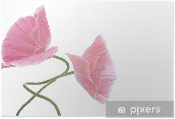 Plakát Mák - Květiny