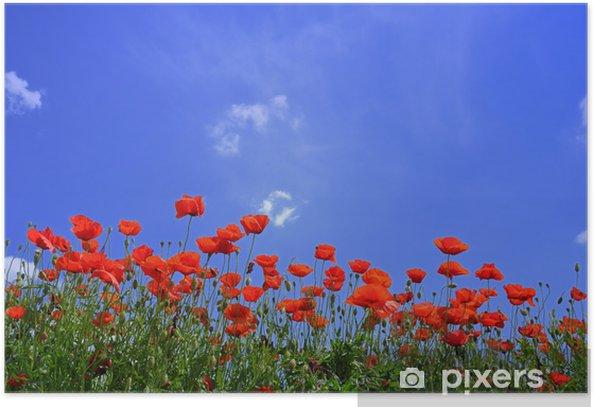 Plakat Maki - Krajobraz wiejski