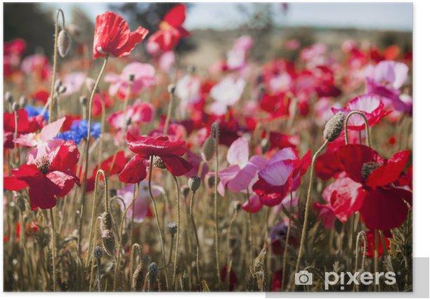 Plakát Maková pole - Květiny