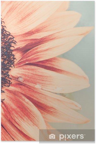 Plakat Makro strzał kwitnących słonecznik - Rośliny i kwiaty