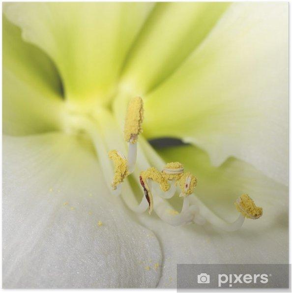 Plakát Makro záběr jemnou, bílou květinu - Květiny