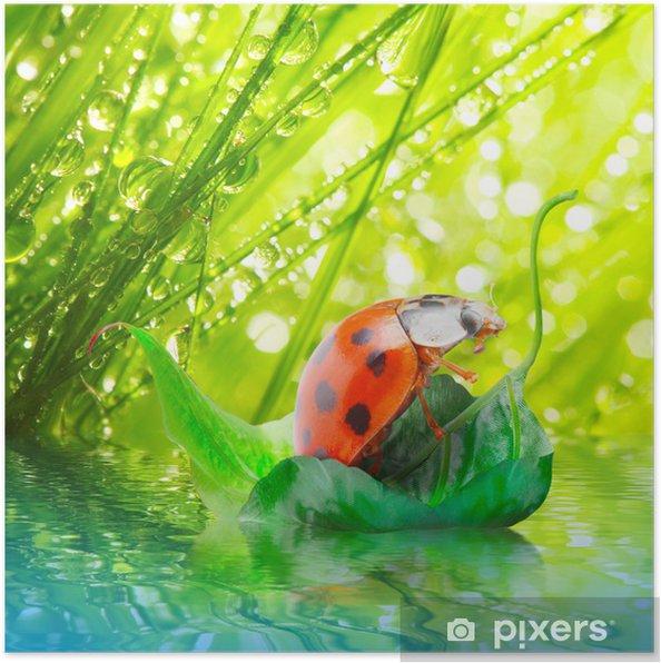 Plakat Mała biedronka pływające na liściu. - Pory roku