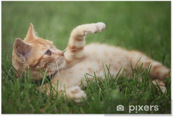 Plakát Malá kočka hraje v trávě. Selektivní zaměření, mělké DOF. - Savci