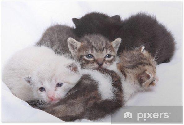 Plakát Malé kočky - Témata