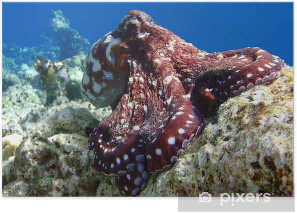 Plakat Malediwy - Ośmiornica - Zwierzęta żyjące pod wodą