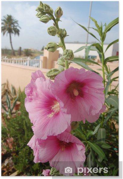 Plakat Malwa - Kwiaty