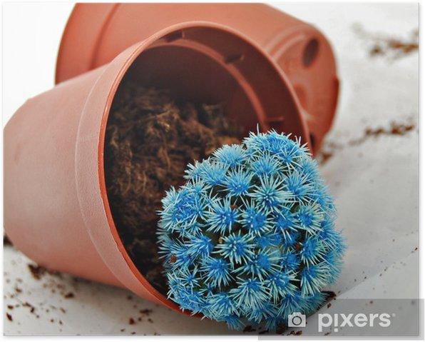 Plakat Mały niebieski kaktus - Kwiaty