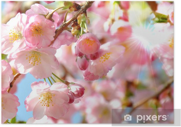 Plakát Mandlový květ - Roční období