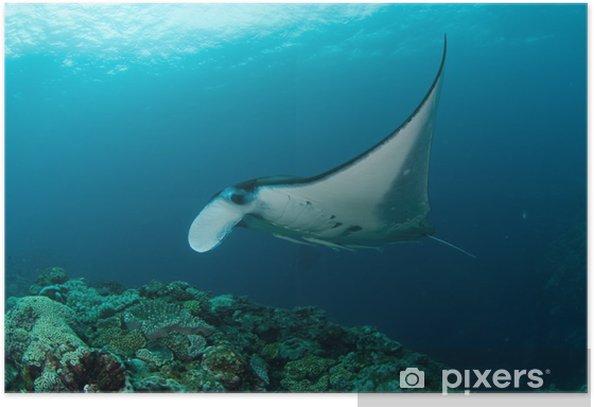 Plakat Manta - Pod wodą