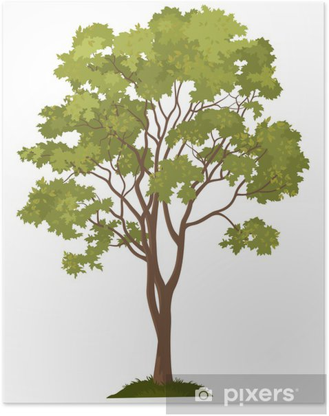 Plakat Maple drzewa i trawa zielona - Cuda natury