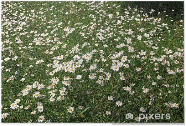 Plakát Margeritenwiese - Květiny