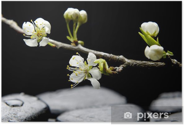 Plakat Martwa natura z różowy kwiat sakura - Uroda i pielęgnacja ciała