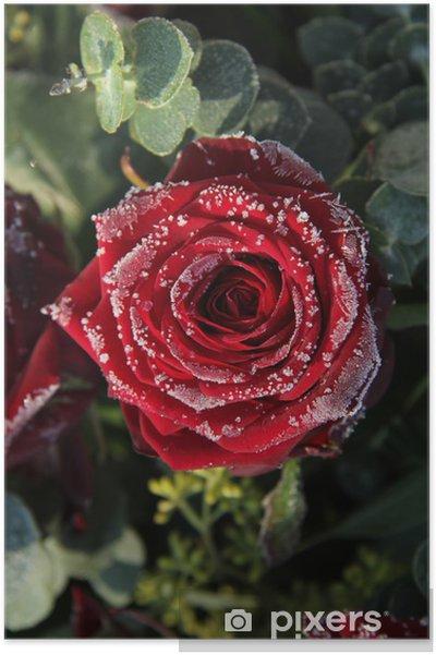 Plakat Matowa czerwona róża - Pory roku