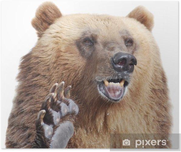 Plakát Medvěd hnědý přivítá s tlapou na bílém - Témata