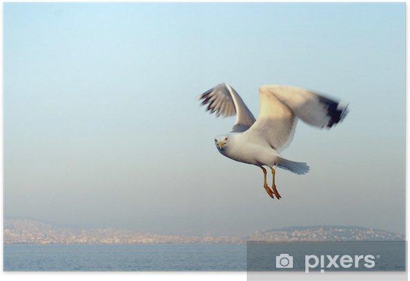 Plakat Mewa - Ptaki