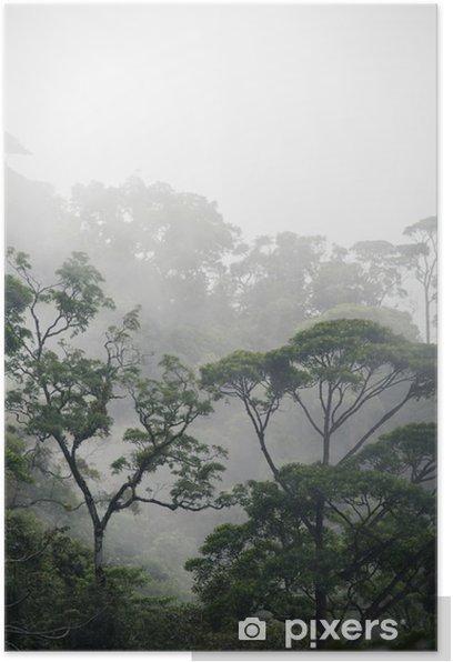 Plakat Mglisty las dżungla - Krajobrazy